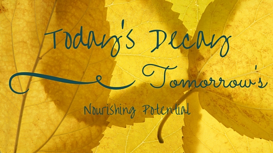 Today's Decay is Tomorrow's Nourishing Potential